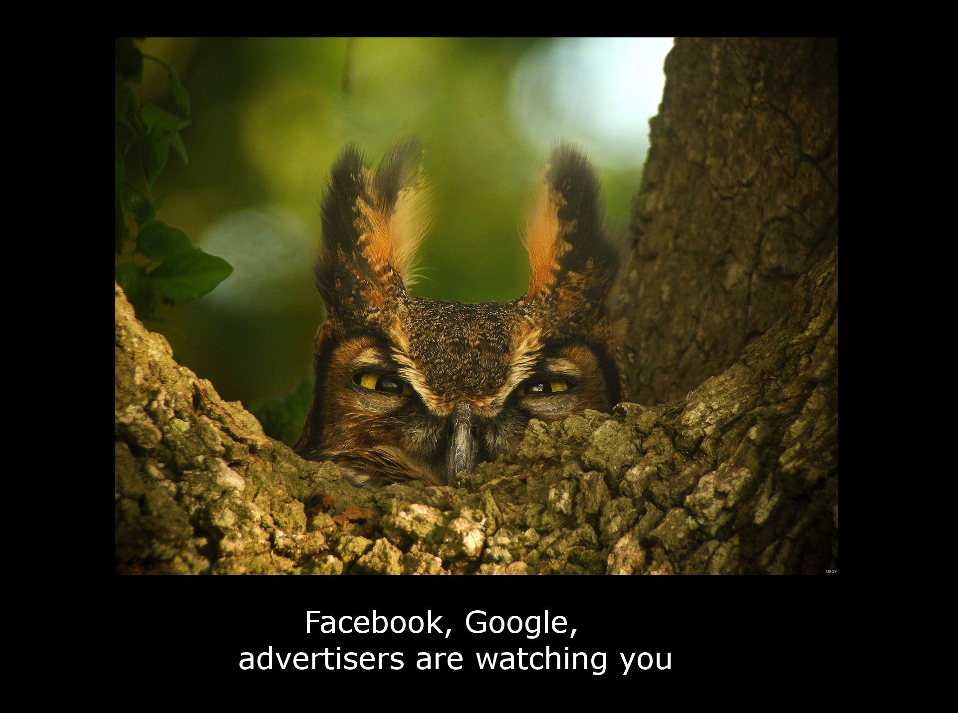 great-horned-owl-1157986_1920